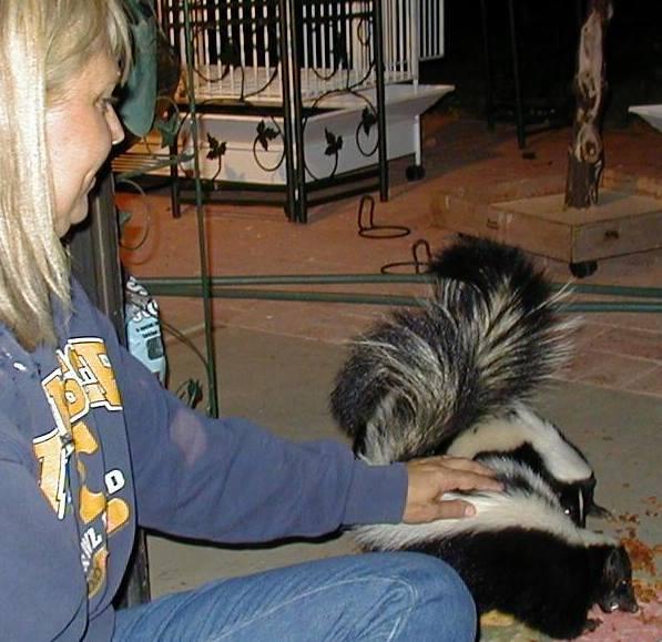 Alexanne Skunk Petting